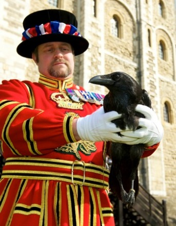 Historic-Royal-Palaces-Raven-Master-Tower-of-London