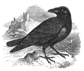 RavenImage
